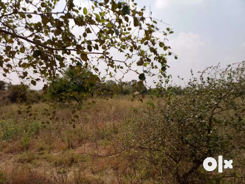 Agricultural land for sale 0