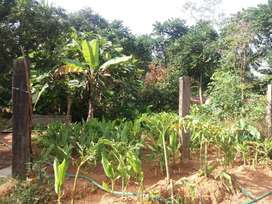 farm with 50 cent land and house for sale near pudoor