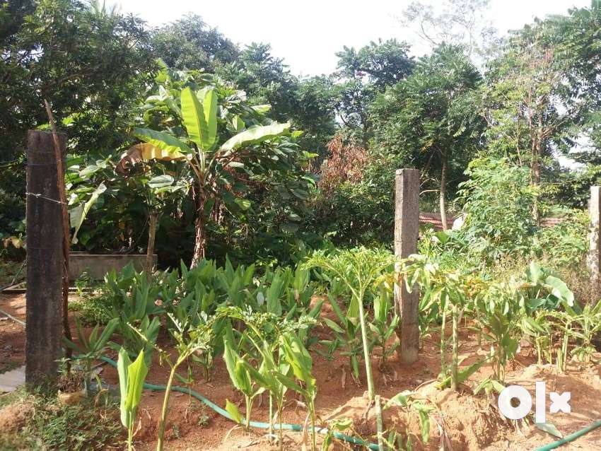 farm with 50 cent land and house for sale near pudoor 0