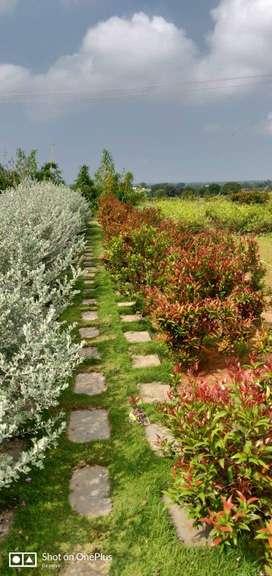 Farm plot for sale in Shadnagar