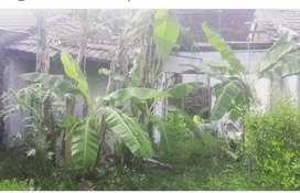 Di jual rumah ambruk hitung tanah di perum Mentari Bumi Sejahtera