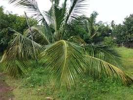 30 cents plot 10 Lacs per cent thrissur