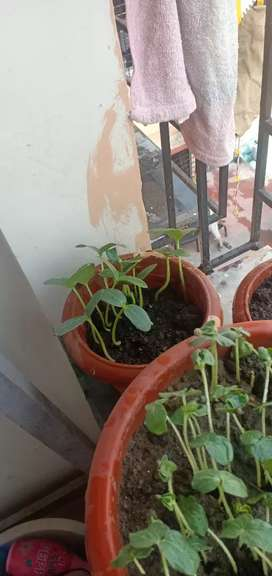 House mate required, female only, Milanpally, Siliguri