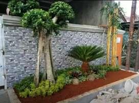 Jual rumput Gajah Mini trima pembuatan Taman rumah