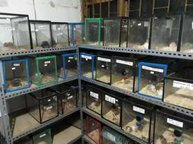 Grosir hamster Bandung