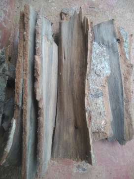 Cinnamon bark(ಇಜಿನು ತೊಗಟೆ )