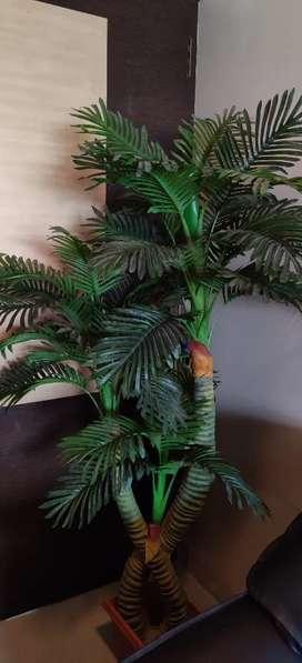 Palm tree for decor