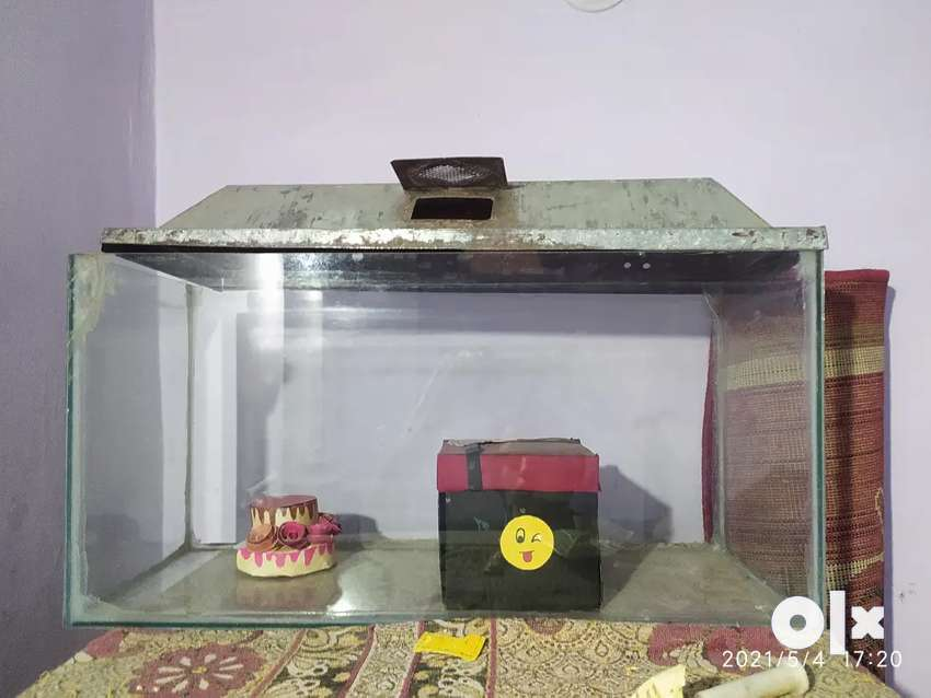 Good condishan fish pot big size