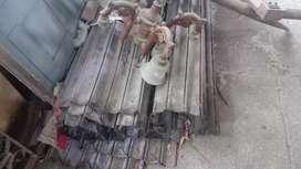 Shop shutter available at Chennai