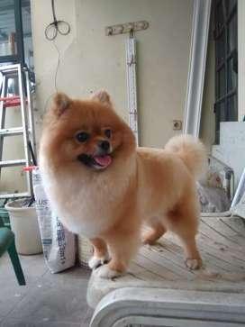Termurah jasa grooming anjing kucing panggilan cukur bulu mandi rumah