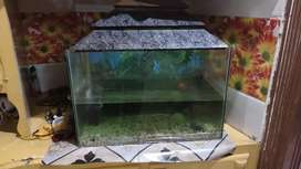 2 feet aquirium for sale including 3 fishes  filter and oxygen pump