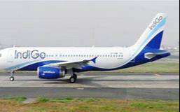 ground staff indigo required apply fast