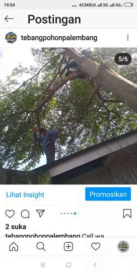 Jasa tebang pohon