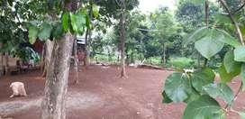 Tanah di Cibinong Bogor