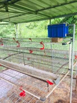 High tech chicken farm cage