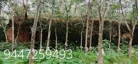 1.42 Acre rubber Near Mammood Changanacherry