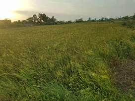 Agricultural land for sell