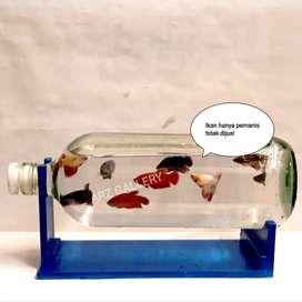 Aquarium cupang