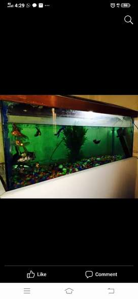 Big huge fish tank