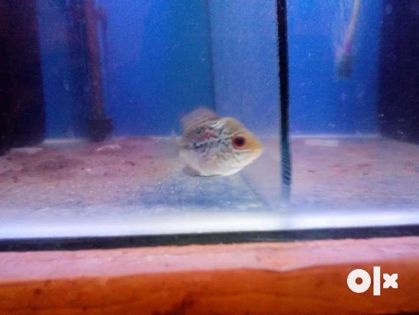 Floran fish 0