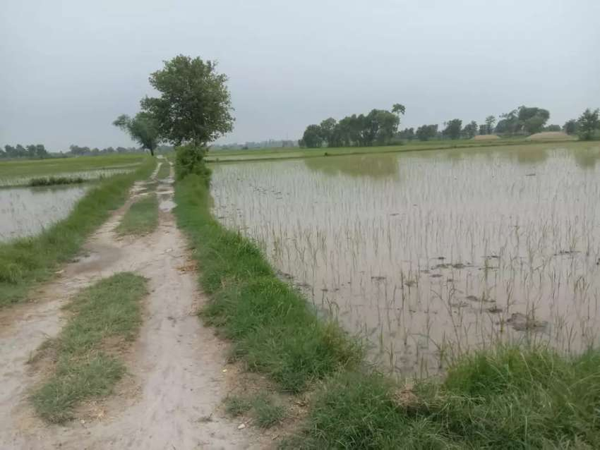Agriculture land for sale 0