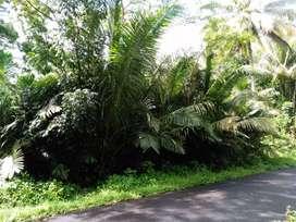Kebun Salak Agrowisata