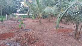 18 CENT PLOT FOR SALE IN ELAVALLY NEAR ELAVALLY SCHOOL GROUND