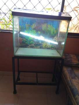 2 Feet Fish Tank with Stand