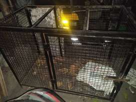 Cage for sale in low price