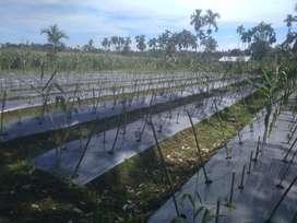 Tanah Datar 3,2 Ha, Harga Tanah Rp.80.000/m nego