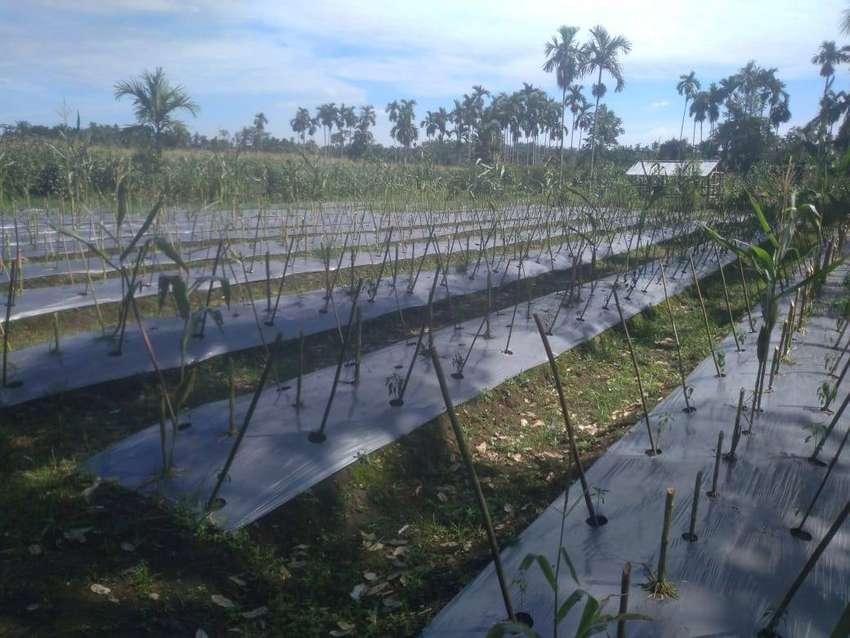 Tanah Datar 3,2 Ha, Harga Tanah Rp.80.000/m nego 0