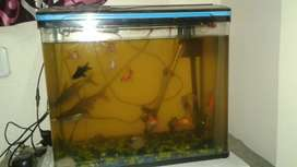 Molded fish tank
