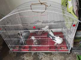 5 pigeons for sale including cage