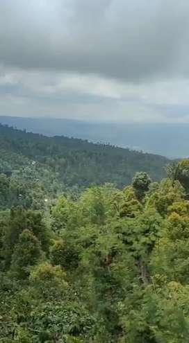 Jual tanah isi kebun kopi view amazing lokasi lovina Singaraja bali