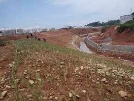Suplai Bibit Rumput Vetiver /Akar Wangi Proyek Samarinda Balikpapan