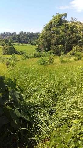 Dijual Tanah Luas View Bagus Lokasi Strategis Sukawati Gianyar Bali