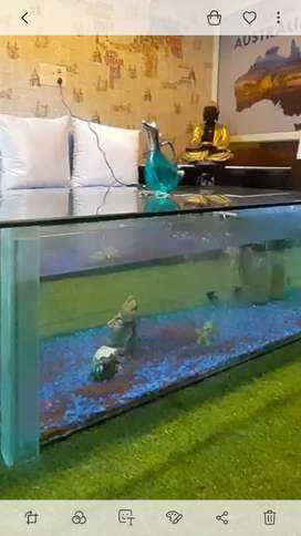 Crzy fish aquarium