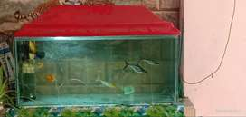 Aquarium for sale(brand new condition)