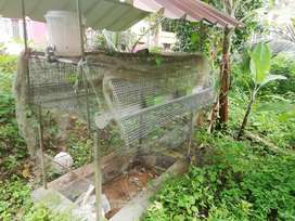 Hen cage 20 hen