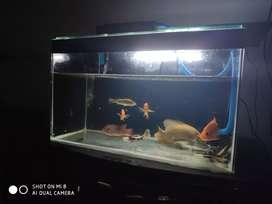 Dijual aquarium pompa + ikan ikannya