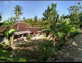 Jual tanah bonus bangunan di Ngabdirejo Natah Nglipar Gunungkidul