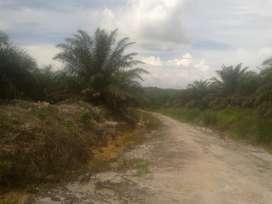 Dijual Lahan Untuk Kelapa Sawit di Sanggau Kalimantan Barat