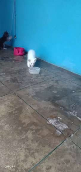 my cat babby is very active and beautiful