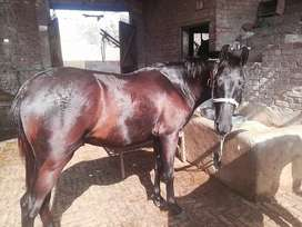 Hors For sale demand 5lakh