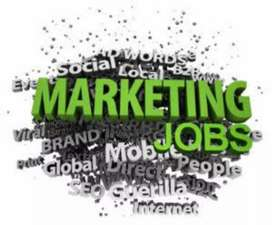 Need Sales Executive & Territory Sales Officer