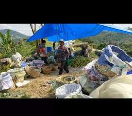 Lowongan kerja di kebun jeruk Beras & Tempat tinggal Gratis  Terbats
