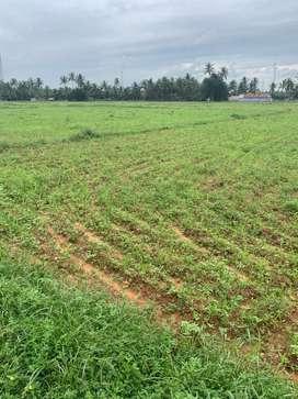 Agriculture land/coconut farm/farm land/farm house/land