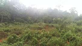 2.5 Acre Land  മൊത്തമായും plot തിരിച്ചും - 10 cent plots
