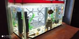 फिश एक्वेरियम Aquarium लंबाई 3 फीट चौड़ाई  डेढ़ फीट