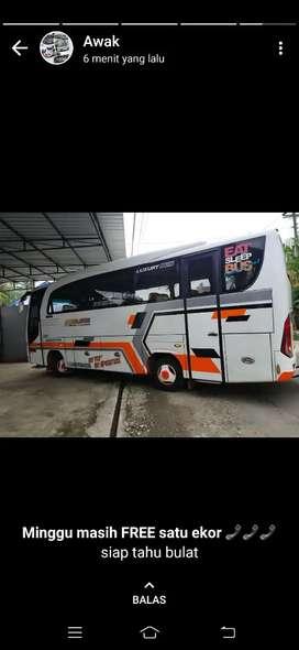 medium bus canter adiputro